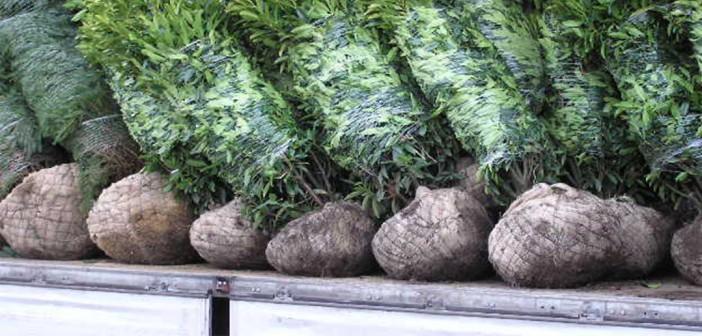 Schwere Pflanzen richtig entladen und transportieren