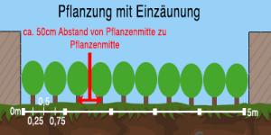 Abstand bei Heckenpflanzen