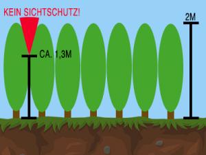Sichtschutz bei immergrünen Heckenpflanzen
