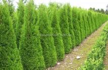 Wann pflanzen? Der beste Pflanzzeitpunkt für Hecken, Sträucher und Bäume