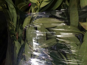 Heckenpflanzen Versand